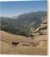 Cambria California Country Road Wood Print