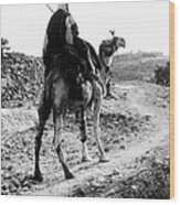 Camel Rider Wood Print