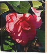 Camelia In The Shadows Wood Print