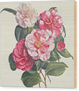 Camelias Wood Print by Augusta Innes Withers