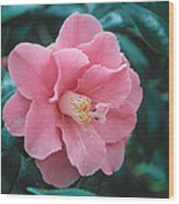 Camellia 1 Wood Print