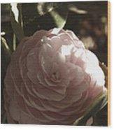 Camellia 2 Wood Print