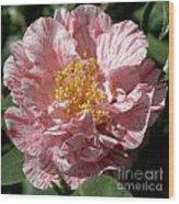 Camellia 2967 Wood Print
