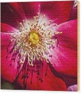 Camellia Wood Print by Carolyn Marshall