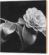 Camellia Flower In Black And White Wood Print