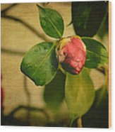 Camellia Wood Print by Marco Oliveira