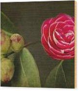 Camellia Wood Print by Rebecca Cozart