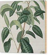 Camellia Thea Wood Print by LFJ Hoquart