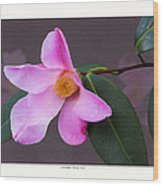 Camellia 'tulip Time' Wood Print by Saxon Holt