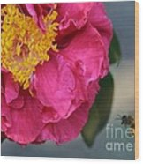 Camellia With Bee Wood Print