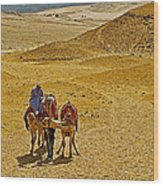 Camels Nuzzling On The Giza Plateau-egypt  Wood Print