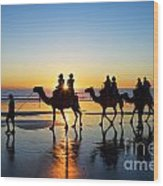 Camels On The Beach Broome Western Australia Wood Print