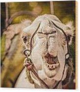 Camel's Smile Wood Print