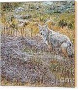 Camo Coyote Wood Print