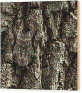 Camo Moth Wood Print