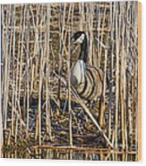Camouflaged Canada Goose Wood Print