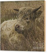 Camouflaged Cow Wood Print