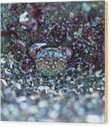 Camouflaged Crab Wood Print by Sarah Crites
