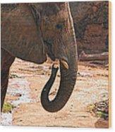Camouflaged Elephant Wood Print