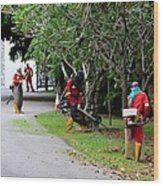 Camouflaged Leaf Blowers Working In Singapore Park Wood Print