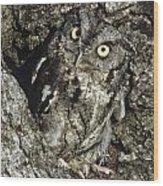 Camouflaged Screech Owl Wood Print