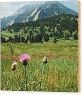 Chautauqua Wildflowers Boulder Wood Print