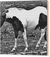 Camp Horse Wood Print