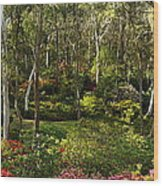 Campbell Rhododendron Gardens 2am 6831-6832 Panorama Wood Print