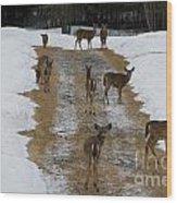 Can Deer Read Wood Print