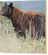 Canada Black Bear Wood Print by Carolyn Ardolino
