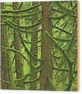 Canada, British Columbia, Mcmillan Wood Print