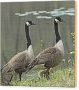 Canada Geese 274 Wood Print