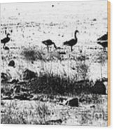 Canada Geese In Black And White Wood Print