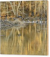 Canada Geese On A Golden Morning Wood Print