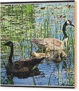 Canada Geese On Lily Pond At Reinstein Woods Wood Print