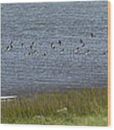 Canada Geese Panorama-signed-8x38 Wood Print