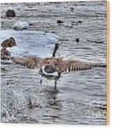 Canada Goose - The Runway Wood Print by Skye Ryan-Evans
