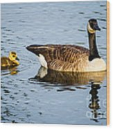 Canada Goose And Gosling Wood Print