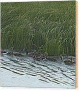Canada Goose Family   #7478 Wood Print