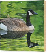 Canada Goose On Green Pond Wood Print