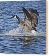 Canada Goose Pictures 111 Wood Print