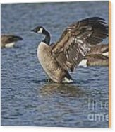 Canada Goose Pictures 165 Wood Print
