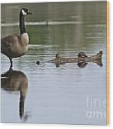 Canada Goose Pictures 172 Wood Print