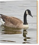 Canada Goose Reflecting In Calm Waters Wood Print