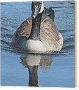 Canada Goose Reflecting Wood Print