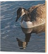 Canada Goose Winter Swim Wood Print