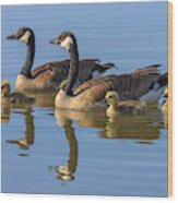 Canada Goose With Chicks Wood Print