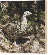 Canada Grouse Wood Print