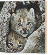 Canada Lynx Kitten Pair Wood Print