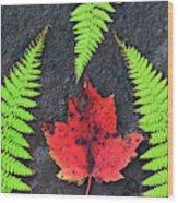 Canada, Nova Scotia, Cape Breton, Three Wood Print